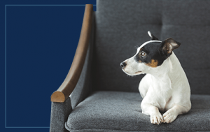 Protect Your Furniture from Pets