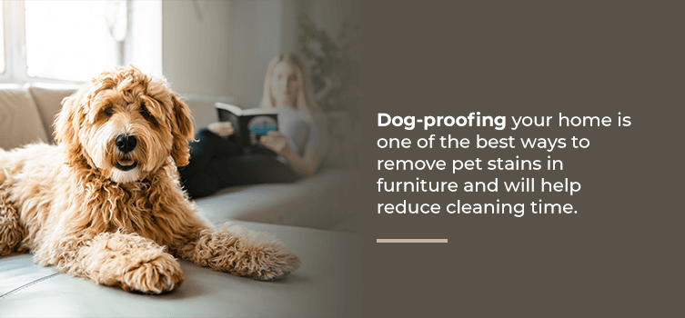 Dog-proof your home to prevent stains