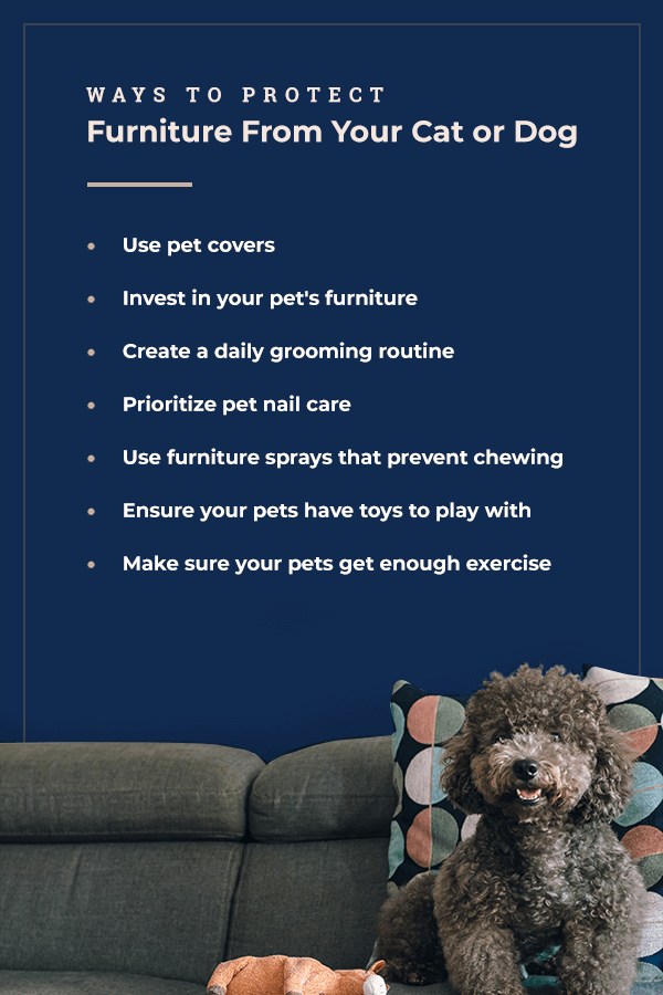 Ways to protect furniture from your cat or dog