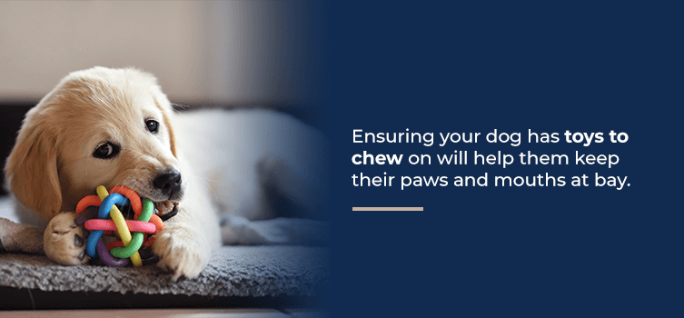Ensure your dog has toys to chew on