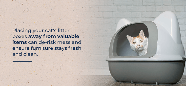 Place litter boxes away from valuable items and furniture