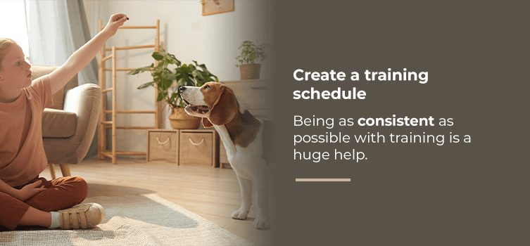 Create a training schedule for pets